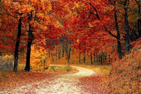 The Month of October 2020: Holidays, Fun Facts, Folklore ...