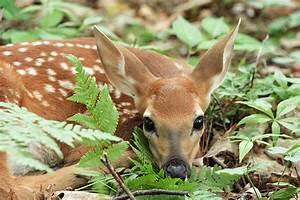 Wildlife Observations