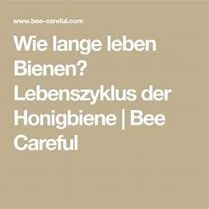 Wie Lange Leben Ameisen : wie lange leben bienen lebenszyklus der honigbiene bee careful bienen honigbiene lebenszyklen ~ A.2002-acura-tl-radio.info Haus und Dekorationen