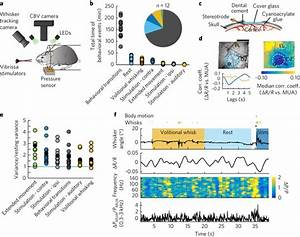 Weak Correlations Between Hemodynamic Signals And Ongoing Neural Activity During The Resting