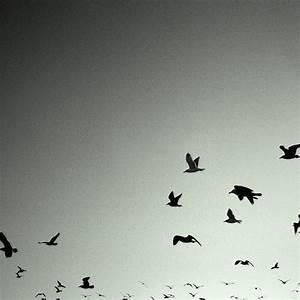 Black And White Bird Wallpaper   www.imgkid.com - The ...
