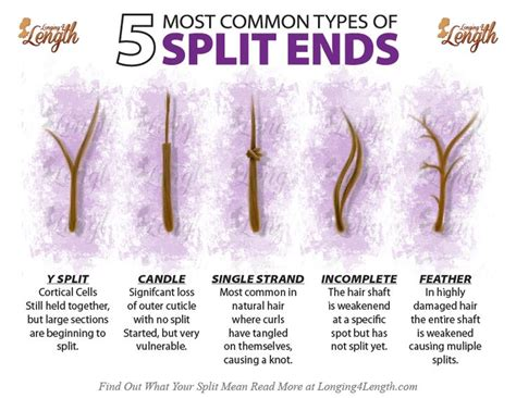 types  split ends       hair