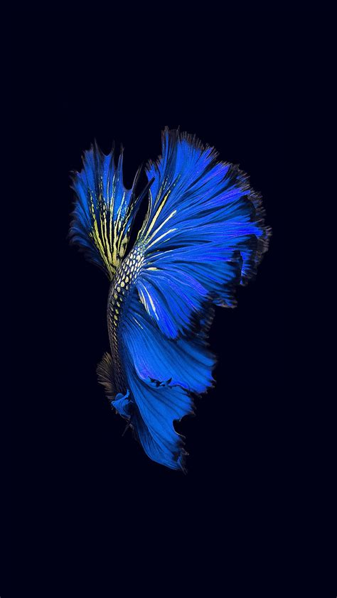 apple ios fish background dark blue android