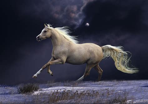 horse  moonlight high quality wall murals