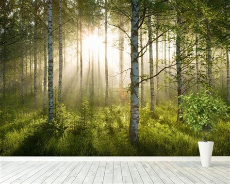 birch forest sunlight wall mural birch forest sunlight