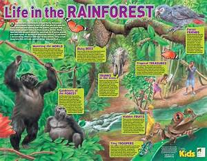 94 Best Images About Rainforest Theme On Pinterest
