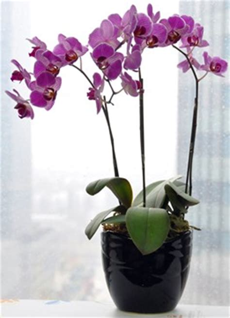 jenis tanaman hias   ruang  bermanfaat