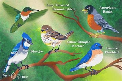 Birds Types Bird Species American North Most