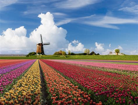 amsterdamse bloemen tulpen 187 holland een leuk en betaalbaar vakantieland