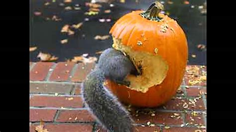 100 funny pumpkin carvings 100 amazing 25 awesome