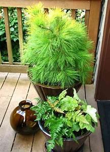 Rankpflanzen Winterhart Immergrün : winterharte balkonpflanzen pflanzarten und pflege tipps ~ A.2002-acura-tl-radio.info Haus und Dekorationen