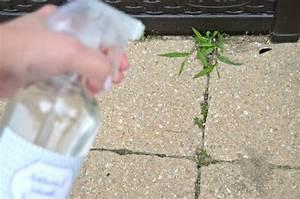 Desherbant Mauvaise Herbe : dites adieu aux mauvaises herbes avec ce m lange cocktail ~ Premium-room.com Idées de Décoration