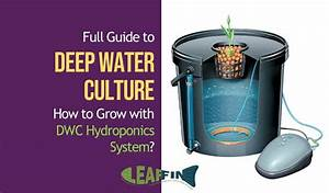 Full Guide To Getting Started With Deep Water Culture