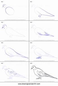 How to Draw a Mourning Dove printable step by step drawing ...