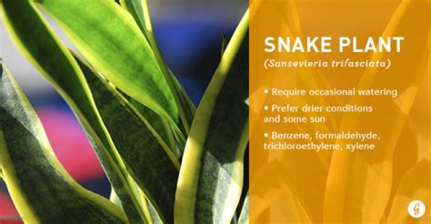 Snake Plant Benefits Air Purifying Plants 9 Air Cleaning Houseplants That Are