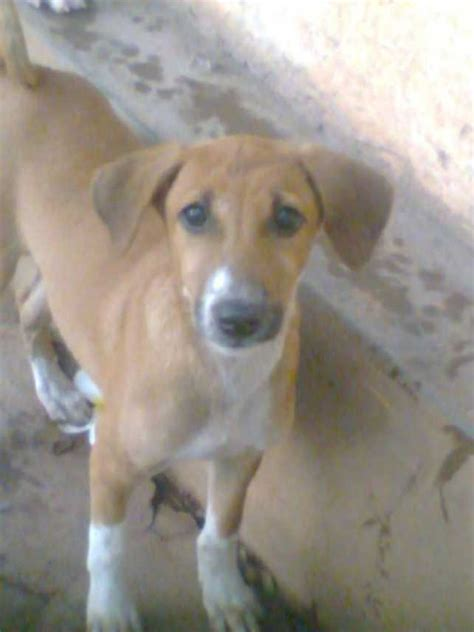 Find A Loyal Best Friend In Sri Lanka Adopt A  Ee  Dog Ee