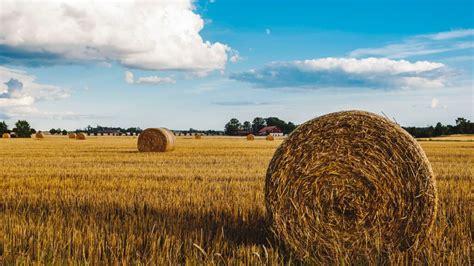 #89 - A Plentiful Harvest