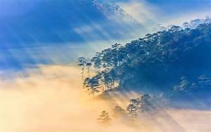 nature, , landscape, , sun, rays, , vietnam, , sunrise, , forest, , mist, wallpapers, hd, , , , desktop, and, mobile