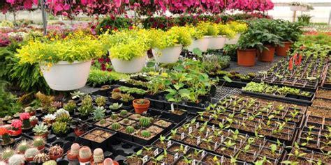 nearest garden nursery nursery florist and cafe business for