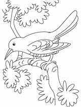 Coloring Cuckoo Bird Pages Branch Sitting Sad Crows Drawing Birds Crow Hummingbird Sheets Printable Drawings Designlooter Print Library Clipart Getdrawings sketch template