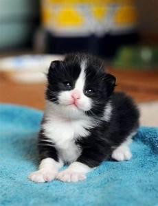 Black And White Newborn Kittens | www.pixshark.com ...