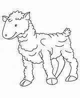 Coloring Pages Baby Sheep Printable Farm Animal Animals Colouring Sheets Printables Crafts Desert Moose Norwegian Jungle Monkey Books Total Views sketch template