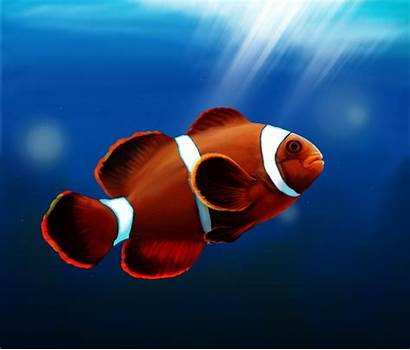 Fish Wallpapers Clown Widescreen Clownfish Paintings Animals