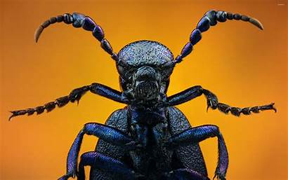 Beetle Oil Insect Animals Wallpapers Birds Animal