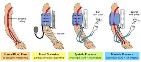 Blood Pressure | BioNinja