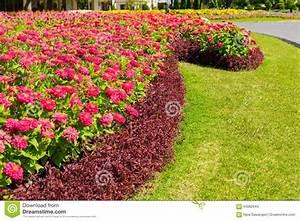 Blumen Im Garten : blumen im garten stockfoto bild von nave field bl hen 64082644 ~ Bigdaddyawards.com Haus und Dekorationen