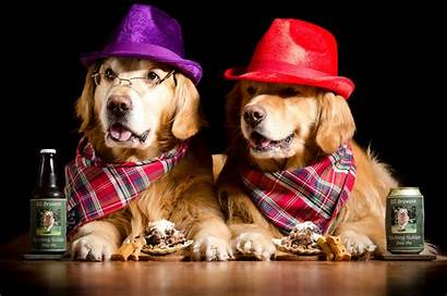 Dogs Hat Glasses Beer Wallpapers Animals Retriever