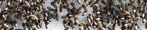 Bienen Vertreiben Essig : biohonig aus ethischer imkerei vom bienenhof pausch die w rde der bienen achten ~ Whattoseeinmadrid.com Haus und Dekorationen