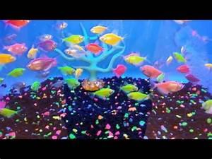 Glofish Neon Tetras
