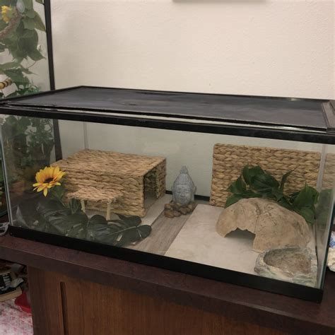 Bearded dragon pick the enclosure size? Pin by Jules on bearded dragon   Entryway tables, Coffee table, Decor