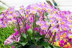 Rempoter Une Orchidee : bien rempoter une orchid e phalaenopsis pour nouvelle ~ Mglfilm.com Idées de Décoration