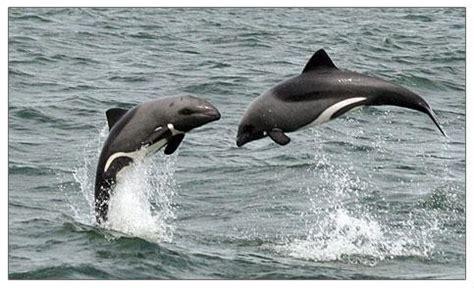 Catamaran Boat Cruise Walvis Bay by Catamaran Charters Dolphin And Seal Cruises In Walvis Bay