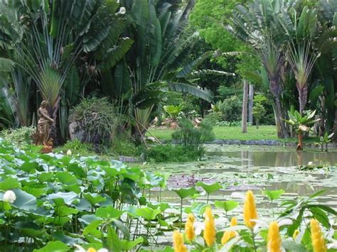 Botanischer Garten Freiburg Parken by Botanical Garden De Janeiro Jardim Botanico Brazil