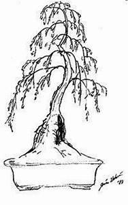 1000 images about bonsai sketch on pinterest bonsai With wiring yew bonsai