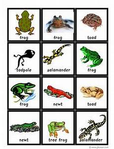 1000+ images about pre-k reptiles/amphibians on Pinterest ...