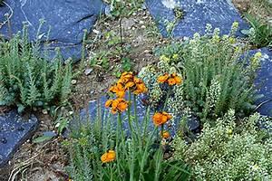 Blumen Für Steingarten : steingarten anlegen und pflegen pflanzen in nanopics ~ Markanthonyermac.com Haus und Dekorationen