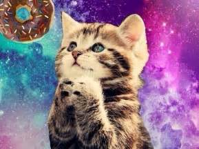 and cat space cats itsspacecats