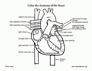 human body systems coloring pages coloring home With smart kes diagram