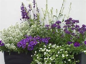 Balkon Gestaltungsideen Pflanzen : balkon gestaltung mit wei en und blaun pflanzen ~ Lizthompson.info Haus und Dekorationen
