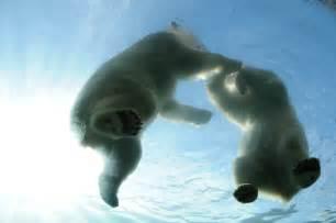 Columbus Zoo Polar Bears