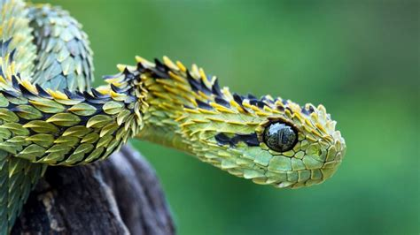 10 Of The Most Venomous Snakes In The World