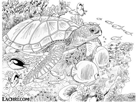 sea turtle coloring pages  adults  getcoloringscom  printable colorings pages