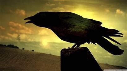 Raven Bird Shadow Dark Sky Silhouette Crow