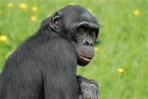 Animal Qui Commence Par U : 2 images pour un nom ~ Medecine-chirurgie-esthetiques.com Avis de Voitures