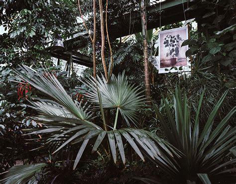 coco kokodama
