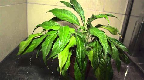 Frischekur Für Zimmerpflanzen